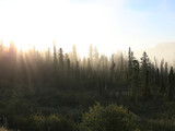 Misty tundra forest