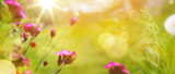 art abstract spring background or summer background with fresh grass and flowers - 210302710