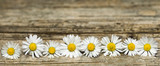 Panoramic image of daisy flowers on rustic wood