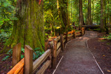 A hiking trail in the Cathedral Grove on Vancouver Island, BC, Canada - 210334590