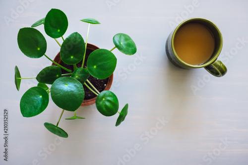 Foto Spatwand UFO Pilea Plant and Coffee Mug on Grey Table