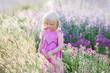 Leinwanddruck Bild - Kleines Mädchen, welches das Lavendelfeld betrachtet