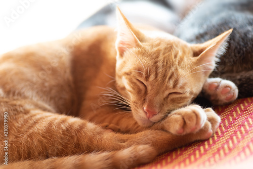 Fototapeta Ginger cat sleeping on the mat, pet at home
