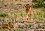 Löwen-Jungs