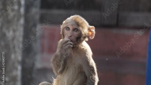 Aluminium Aap monkey baby 5