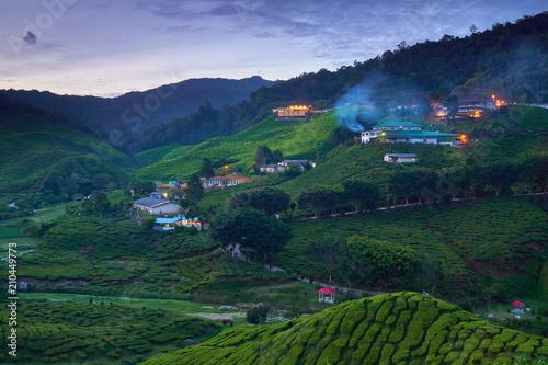 Fotobehang Nachtblauw Cameron Highlands Tea Plantation