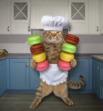 The cat chef holds two stacks of colored cookies in the kitchen. - 210458962