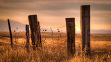 Wooden post barbed wire fence surrounding a field at sunset. - 210494321