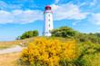 Leinwanddruck Bild - Dornbush lighthouse in spring landscape with flowers on northern coast of Hiddensee island, Baltic Sea, Germany
