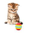 Leinwanddruck Bild - British short hair kitten.