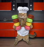 The cat chef holds two stacks of colored cookies in the kitchen. White background. - 210516770