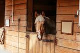 Beautiful horses, animals, pasture, stables, horseback riding - 210518349