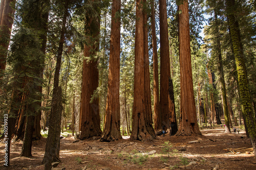 Leinwanddruck Bild Mother with infant visit Sequoia national park in California, USA