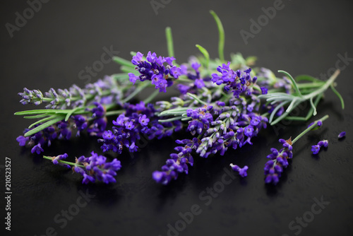 Lavendel - 210523527