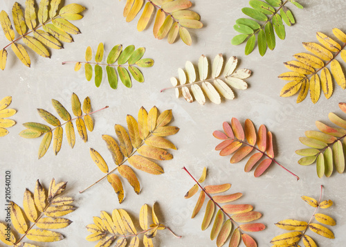 Rustic autumn background made of colorful fallen leaves.