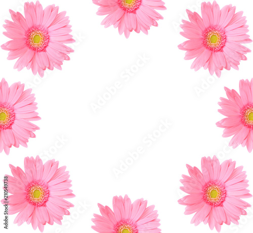 Aluminium Gerbera Pink gerbera daisy flower isolated on a white background