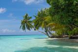 Tropical Palm Beach - 210563137