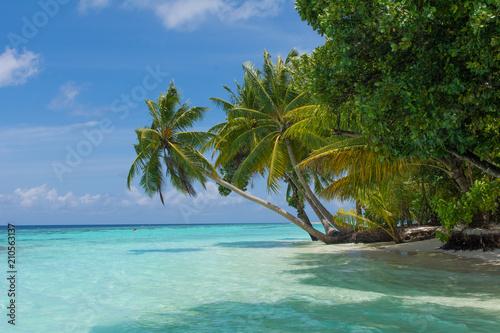Aluminium Tropical strand Tropical Palm Beach