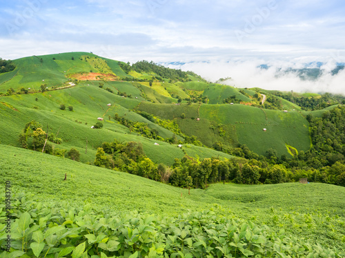 Fotobehang Pistache A landscape view of nature of green mountain at sunrise morning time with clear blue sky