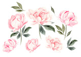 Beautiful Watercolor set with peony flowers.  - 210583935