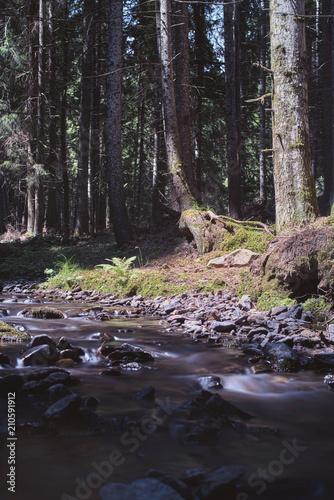 Aluminium Zwart Forest creek