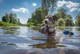 Terrier im Wasser