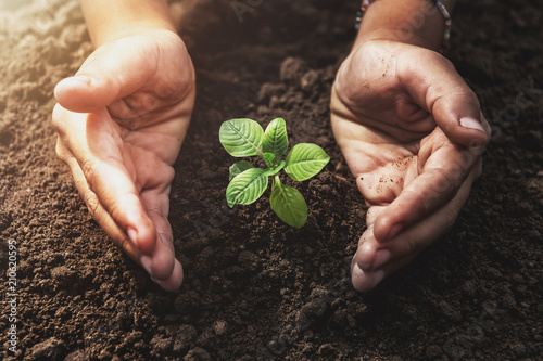 plant growing with hand protection and sunshine in garden. concept eco - 210620595