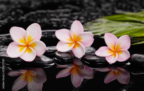 Aluminium Spa still life with frangipani with green leaves on black stones