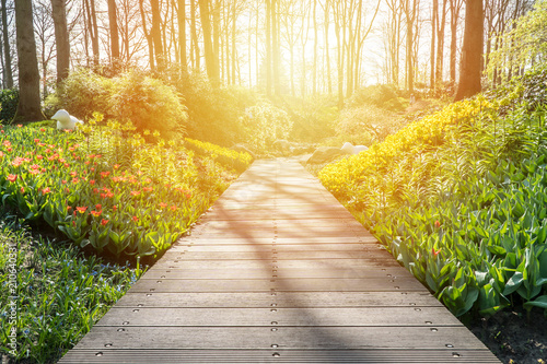 Fotobehang Honing Boardwalk in a beautiful garden
