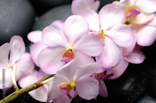 Aluminium Spa Lying on branch orchid on black stones reflection