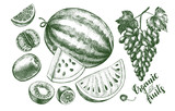 Ink hand drawn set of fruits - watermelon, grapes, kiwi fruit, tangerine. harvest elements collection with brush calligraphy style lettering. Vector illustration. - 210647513