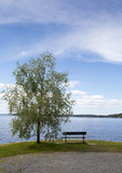 Empty bench on the lakeside. Beautiful view to the sea or lake. Single tree next to the chair. Finnish summer evening. - 210652976