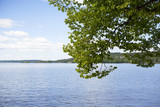 View to the big lake behind a tree. - 210662746