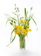 Yellow and half-blossoming dandelions and meadow grass in glass vase on white background