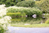 Beautiful pond in the garden. Water is reflecting the colorful grass and flowers and bushes. - 210728392
