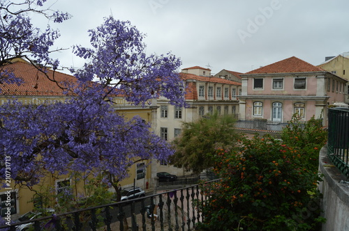 Aluminium Aubergine Purple Tree