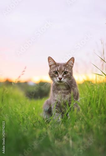 cute beautiful striped kitten fun and rushing through the green summer meadow - 210742523