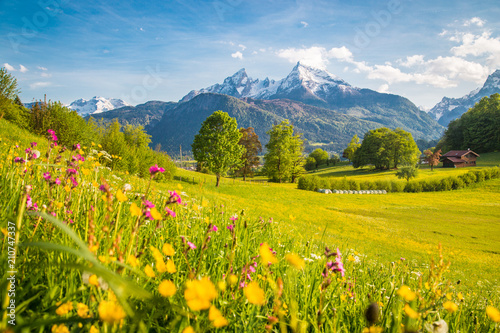 Leinwanddruck Bild Idyllic mountain scenery in the Alps with blooming meadows in springtime