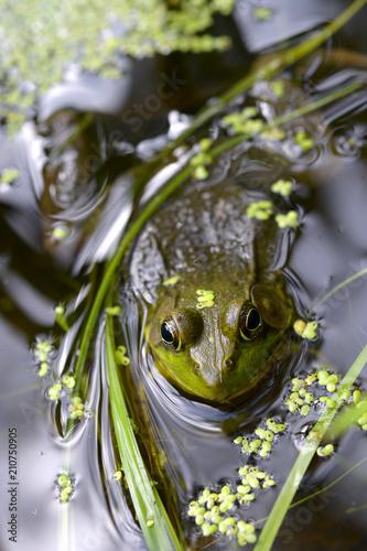 Fotobehang Kikker frog heaven