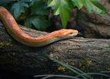 Schlange orange - 210756748