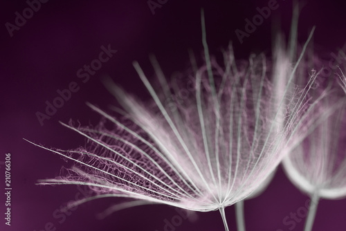 Aluminium Paardenbloemen A macro view of a dandelion seed