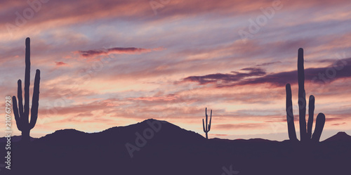 Vintage Wild West Desert with Cactus