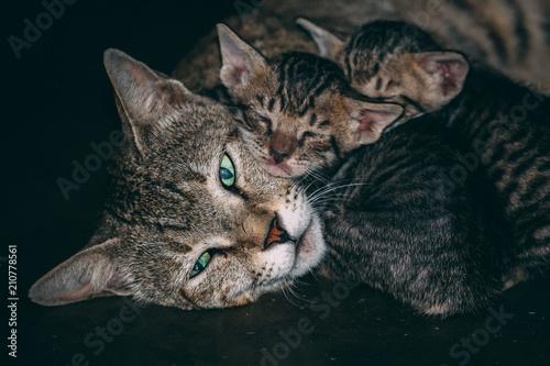 Fotobehang Kat Small Tiny Kitten sleeping with mom