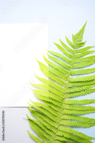 Simple beauty / Creative concept photo of fern on blue backgrround.