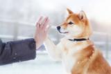 Hund berührt mit Pfote die Hand eines Menschen