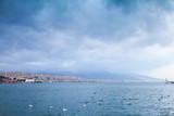 Floating seagulls. Izmir, Turkey - 210802110