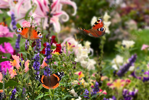 Leinwanddruck Bild Schmetterling 509