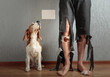 Leinwanddruck Bild -  Beagle and his owner in torn pants and bitten feet.