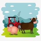 pigs in the farm scene vector illustration design