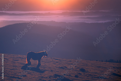 horse in the mountain at the sunset with dreamy light - 210863356